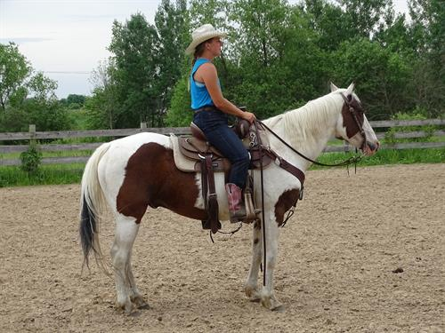 Horse Classified Ad Ozzy