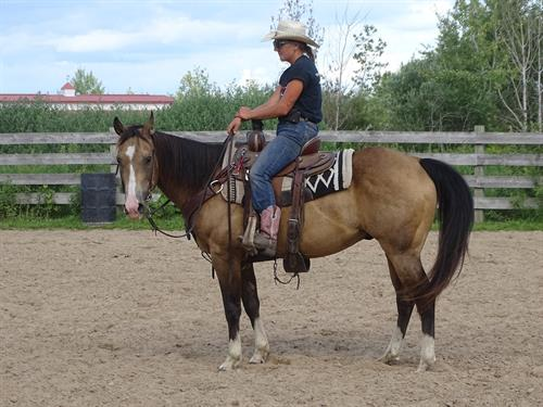 Horse Classified Ad Magnum