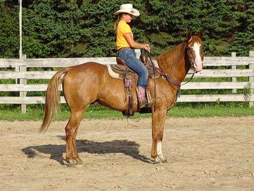 Marley, Big Good Looking Gelding, Has the personality to match his looks.